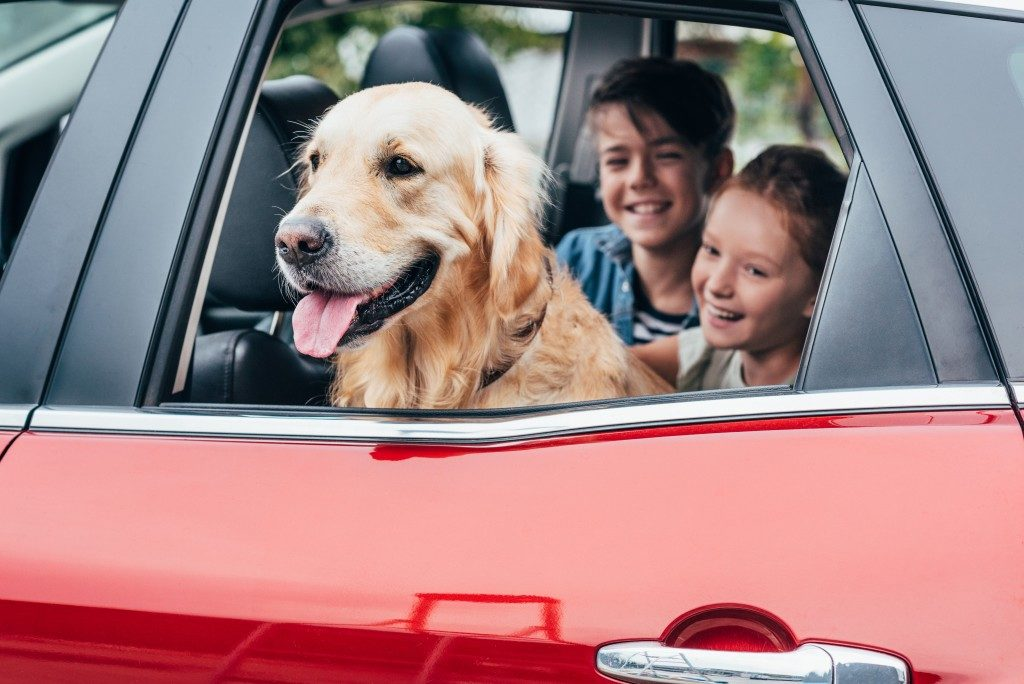 dog with family inside the car